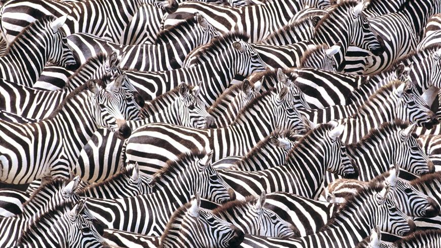 zebra_cvr_pict2